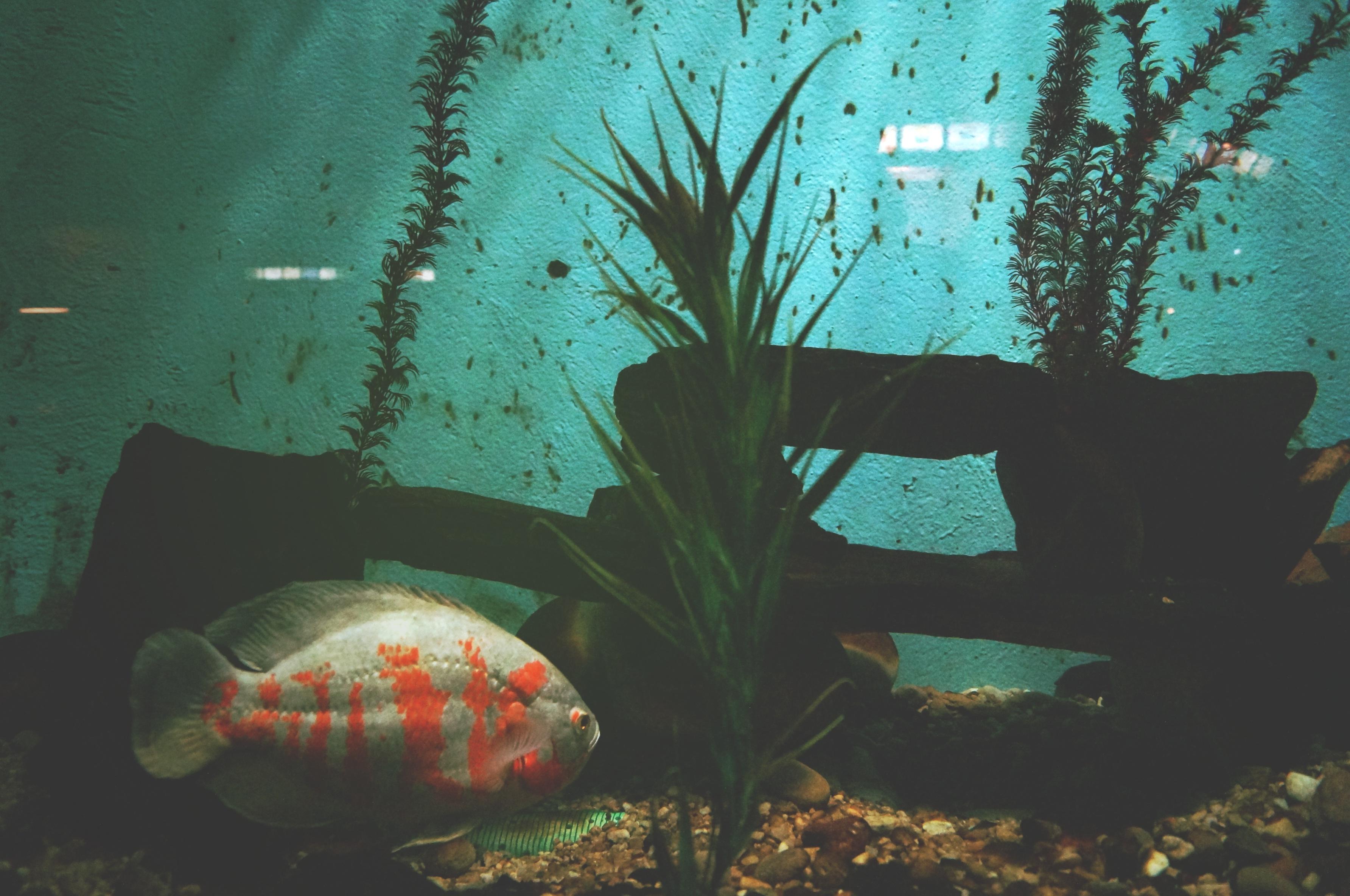 obraz akwarium