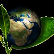 Ekologiczne wnętrza
