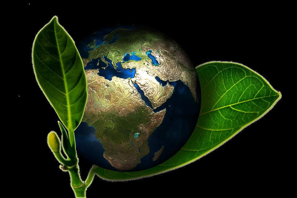 Ziemia i rośliny